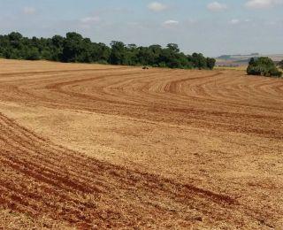 Plantio da safrinha de milho em Itambé (PR), do produtor Nivaldo Forastieri