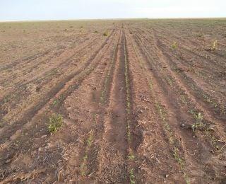 Lavoura de soja em Uruçuí (PI), na Fazenda Marcolin