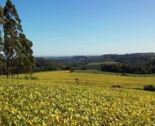 Lavoura de soja em Boa Esperança do Iguaçu (PR), da Família Borsa