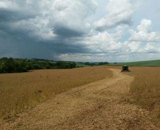Início da colheita de soja em Ronda Alta (RS). Enviado pelo Engenheiro Agrônomo Dionatan Borba