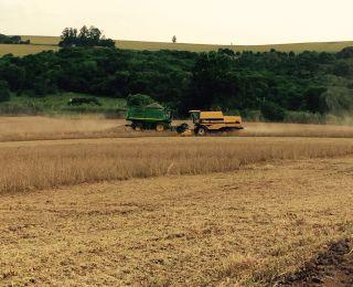 Colheita de soja em Ouro Verde do Oeste (PR), na Fazenda Santa Rosa. Enviado pelo Engenheiro Agrônomo Rodrigo Firmino