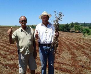 Colheita de soja e plantio de milho safrinha em Nova Aurora (PR). Enviado pelo Técnico Agrícola David Clemente.