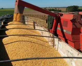 Colheita de milho em Capanema (PR), no sítio da Família Trevisan
