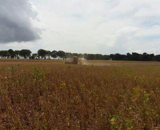 Colheita de soja em Itambé (PR), do produtor Nivaldo Forastieri
