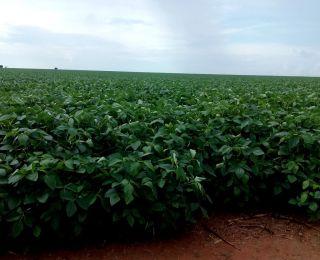 Lavoura de soja em Nova Nazaré (MT), na Fazenda Nova Geração