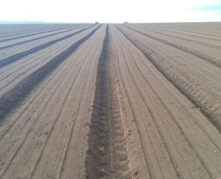 Plantio de cebola em Santa Juliana (MG). Enviado pelo Engenheiro Agrônomo Antonio Junior
