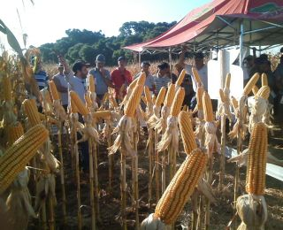Dia de Campo em Saldanha Marinho (RS)