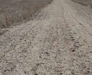Início da colheita de soja na Fazenda Sonho  Meu em Pimenta (MG)