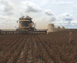 Colheita de soja na Fazenda São Francisco em Brianorte (MT)