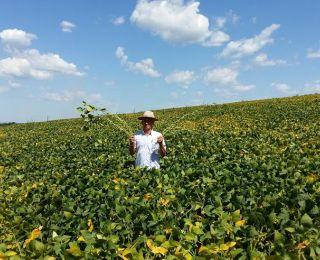Lavoura de soja em Espigão Alto do Iguaçu (PR). Envio de Wilson Deitoz