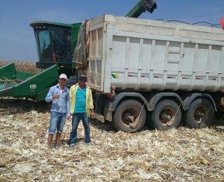 Colheita do milho em Poço Verde (SE), do produtor José Everaldo