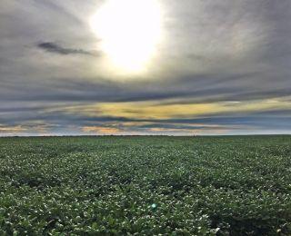 Lavoura de soja em São José do Xingu (MT), na Fazenda Pesa III, do produtor Paulo Egidio