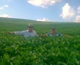 Lavoura de soja em Coronel Vivida (PR), na Fazenda De Carli