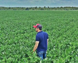 Lavoura de soja em Sinop (MT), na Fazenda Aeroporto, do produtor Reginaldo J. Novacki