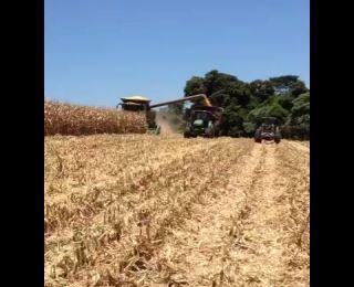 Colheita de milho em Bom Sucesso do Sul (PR), da Família Munaretto