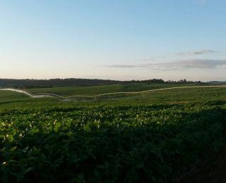 Estiagem afeta lavouras de soja em Bela Vista do Toldo (SC)