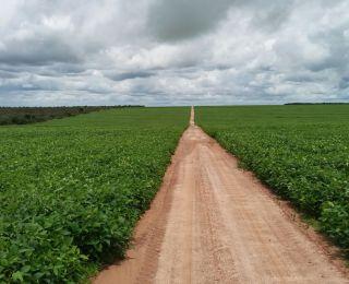 Lavoura de soja em Correntina (BA), na Fazenda Santana