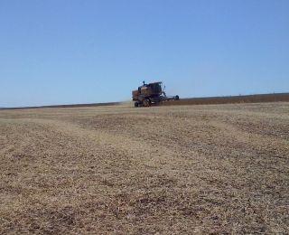 Início da colheita de soja em Marmeleiro (PR), na propriedade da Família Loff. Enviado por Rafael Loff Marca