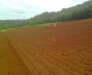 Plantio de batata em Ibiraiaras (RS), do produtor Rudinei Trevisan