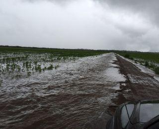 Lavoura de soja após chuvas na região de Balsas (MA). Envio do produtor Valério Mattei