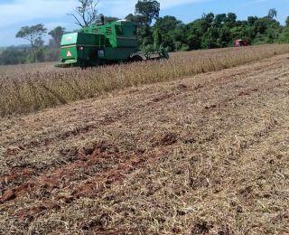 Colheita de soja em Pirassununga (SP), no Sítio Primavera, do produtor José Capodifoglio