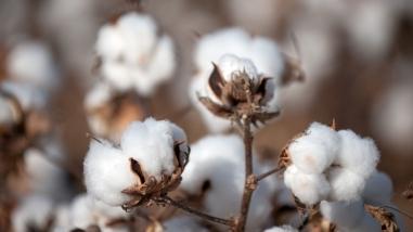 Setores de fibras têxteis naturais, artificiais e sintéticas ...
