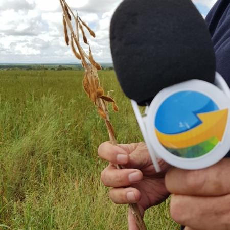 João Batista - soja e milho - 2019 - Fazenda Marabá - Campo Verde - MT