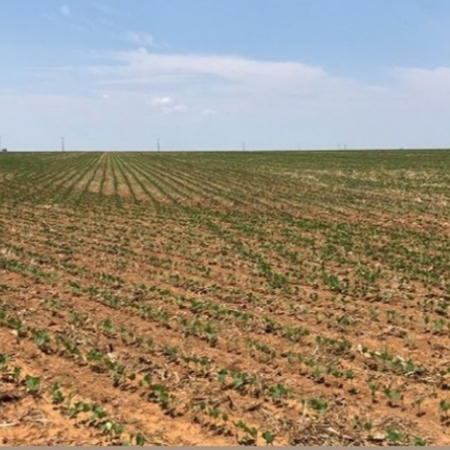 Plantio da soja 2019/20 - Primavera do Leste/MT - Foto: Ana Luiza Borghetti
