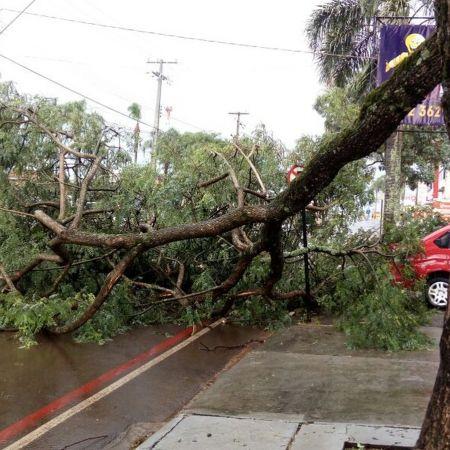 Árvore caída na Avenida Manoel Ribas, em Guarapuava (PR) - Foto: Eduardo Andrade-RPC