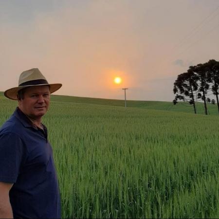 Lavoura de trigo em Rio dos Índios-RS. Envio do produtor Evandro Filiciani.