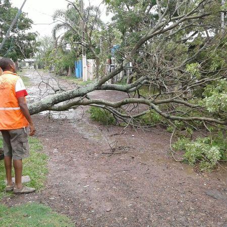 Árvore caída em rua de Uruguaiana (RS) (Foto: Defesa Civil/Divulgação)