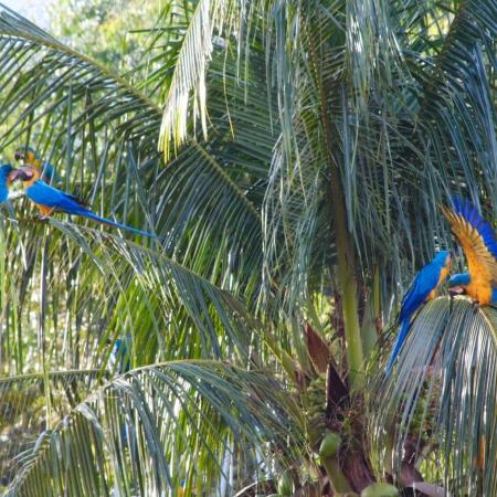 Imagem de Rio Verde (GO). Envio de Alex Zamorano