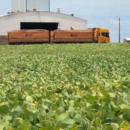 Colheita de soja na cidade de Jataí (GO) - Napoleão Fabiane @njfalimentos