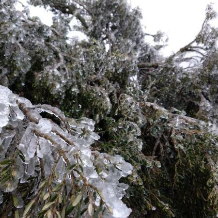 Neve nesta quinta-feira em Urupema (SC) - Foto: Gabriela Machado/ Reprodução Redes Sociais