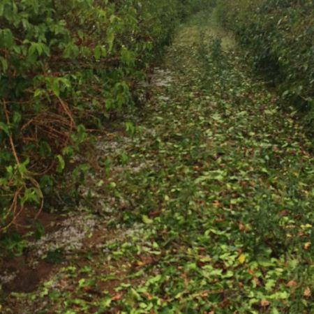 Chuva de granizo em Unaí (MG) - Foto: Reprodução/Redes Sociais