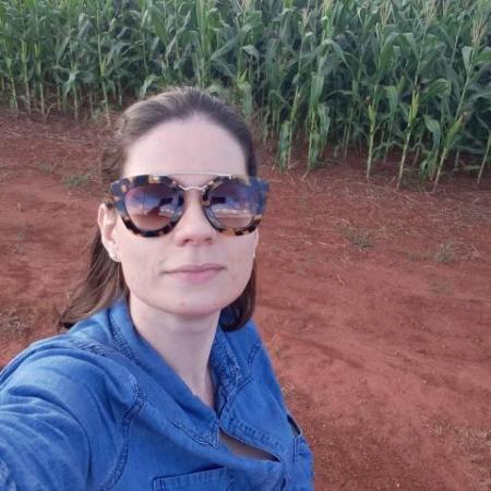 Lavoura de milho em Itiquira (MT). Envio de Paula Naves