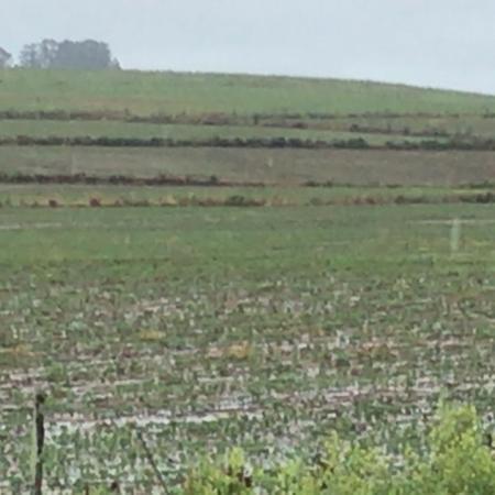 Excesso de chuvas em lavouras de soja na região de Caçapava do Sul (RS) - Foto: Guilherme Medeiros