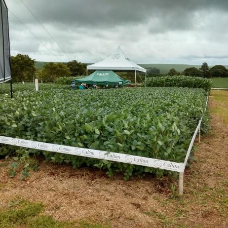 Dia de Campo da Plantar em Cascavel (PR). Envio de Ari Antonio Scherer