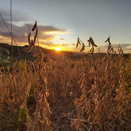 Foto em Paulo Bento (RS). Envio pelo técnico em agropecuária Anderson Ziger