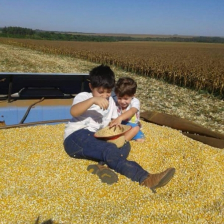 Os pequenos na colheita de milho em Primavera do Leste (MT) - Gustavo Orlando e filhos