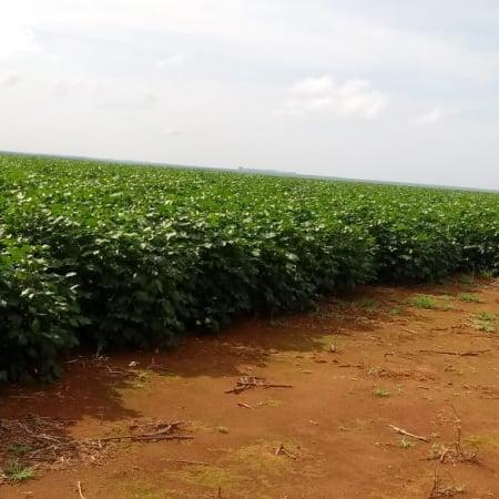 Fazenda Marabá/MT - Fotos assessoria de imprensa