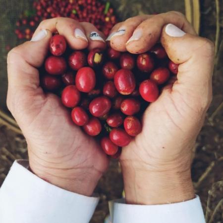 Apaixonada pelo café. Não só pelo café em si, mas por tudo e por todos que ele beneficia direta e indiretamente em Lambari (MG) - Janaína Magalhães