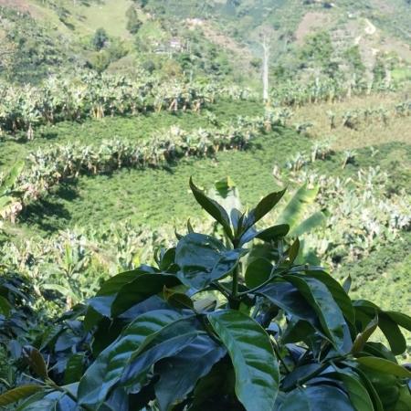 café colômbia