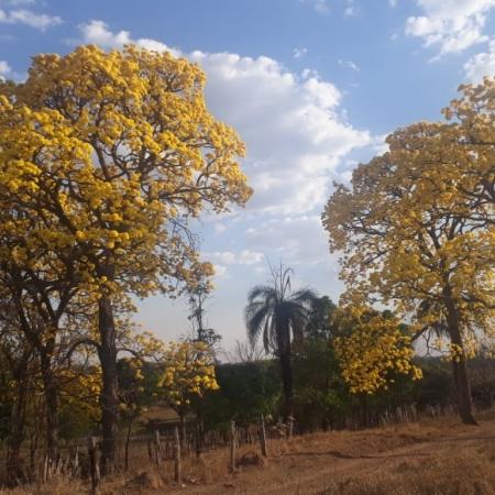 São Luiz dos Montes Belos-GO Marcos de Castro