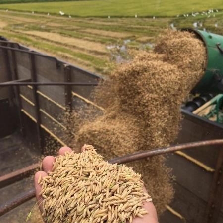 Colheita de arroz no Agro Nova Aliança em Lagoa da Confusão (TO) - Guilherme Santaretto