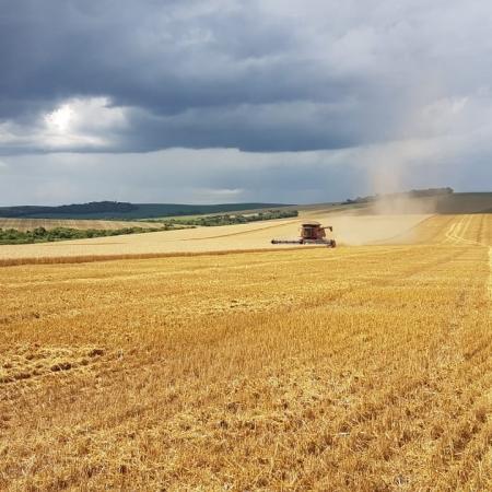 Colheita trigo na Fazenda Boa Vista em Candói (PR). Envio de Gibran Araújo