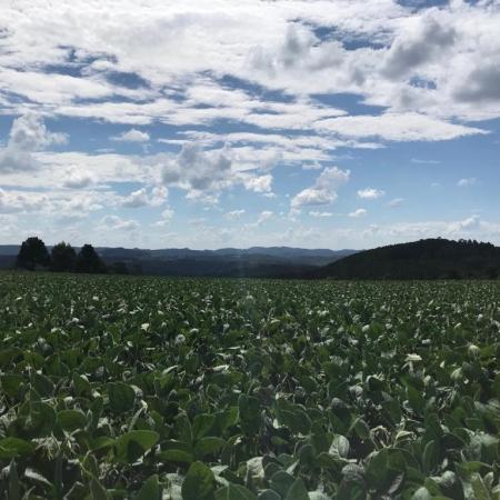 Lavoura de soja no município de Bituruna (PR) - Orli Mota Jr