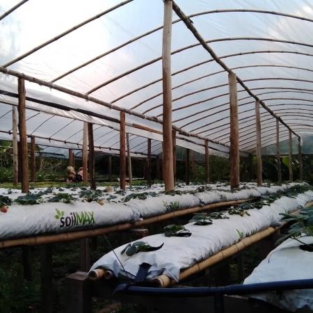 Estufa agrícola de produção de morangos em Itaiópolis-SC Foto de Paulo Marcelo Adamek
