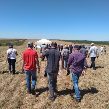 Dia de campo sobre integração lavoura pecuária em São Miguel das Missões (RS). Envio de Amaurel Sonego.