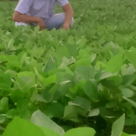 Monitoramento e comércio futuro da lavoura de soja em Hidrolândia (GO). Envio Comercial, Leonardo Duarte e Agrônoma, Ana Carolina